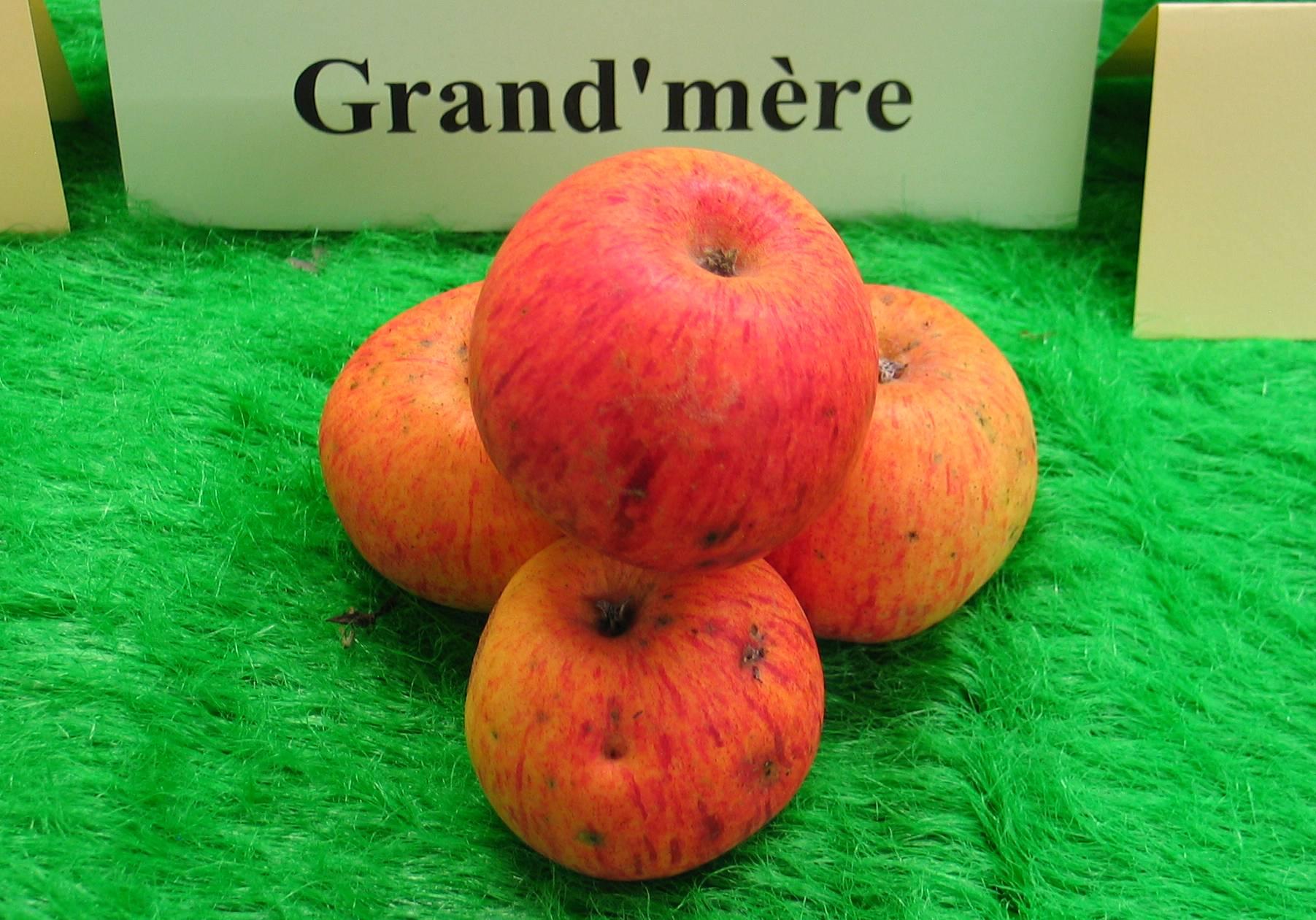Grand m re association les mordus de la pomme - Cul de grand mere ...